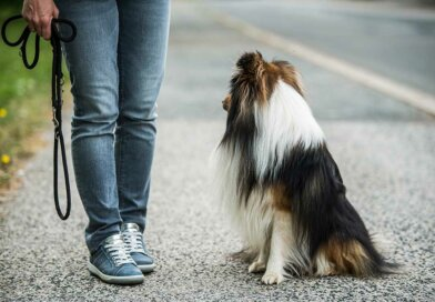 Why Not to Walk A Dog Without a Leash – Top Dog Tips