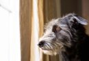 Things You Can Do To Ease Separation Anxiety In Your Dog After Covid
