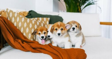 Dog Hiccups: Can Dogs Get Hiccups?